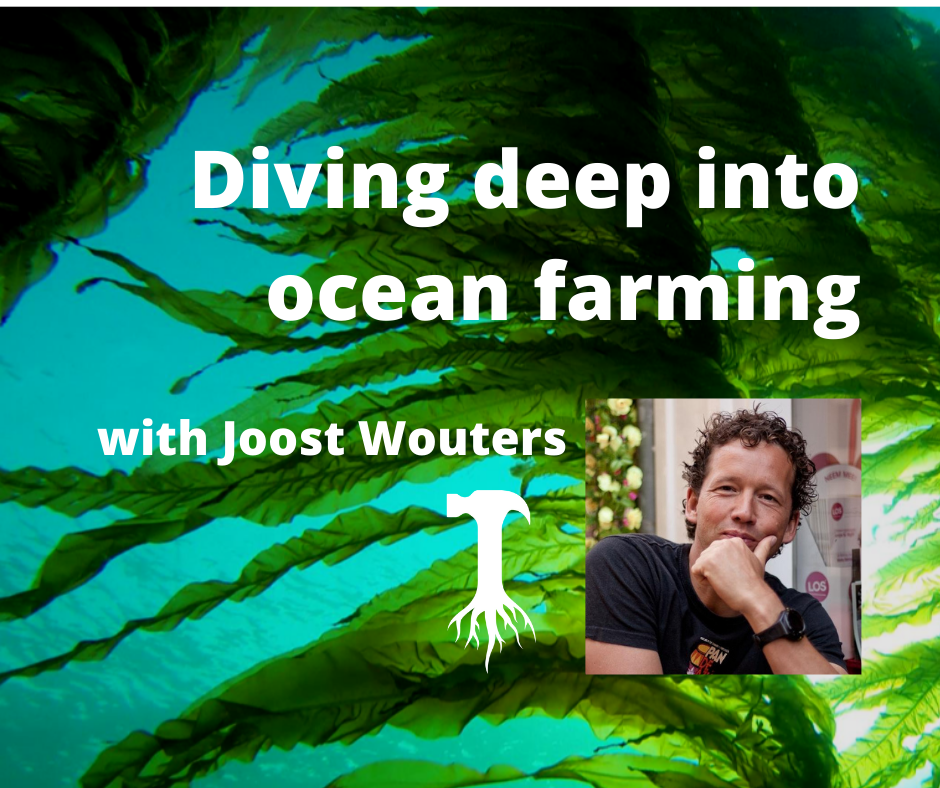 Diving deep into ocean farming,with Joost Wouters of the Seaweed Company