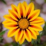 Jeffrey Friedl S Blog Photographer S Low Hanging Fruit A Pretty Flower