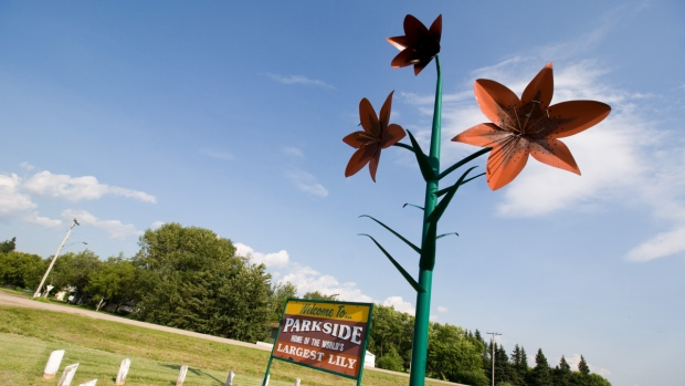 World's largest lily