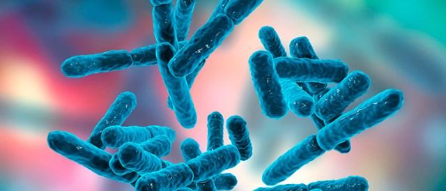 cepas bacterianas