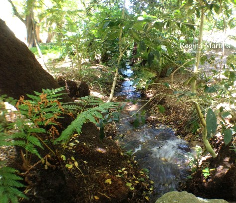 Kirstenbosch Botanical Gardens in Cape Town, South AFrica