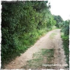The road less traveled ©2015 Regina Martins