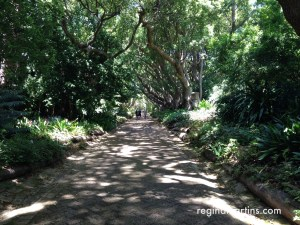 Dappled walkway at Kirstenbosch Botanical Gardens in Cape Town ©2016 Regina Martins