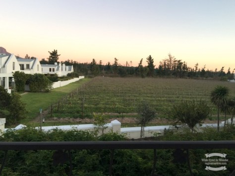 De Zalze Winelands Estate - the view from my window in Stellenbosh ©2016 Regina Martins