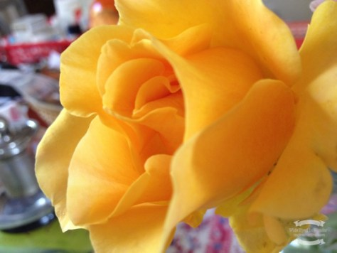 Yellow rose from my Mom's garden ©2016 Regina Martins