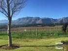 Stellenbosch winelands ©2017 Regina Martins