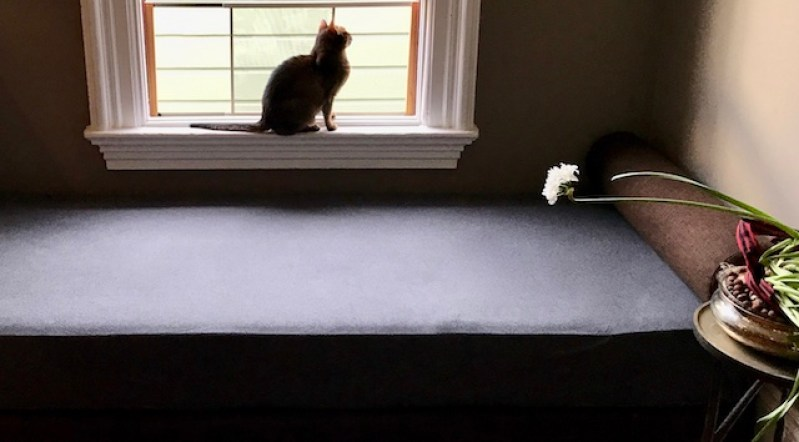 Small, short-haird cat sits in an open screened window, above a sofa. A narcissus bloom stretches over the sofa's edge.