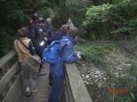 Brücke über den Waldbach