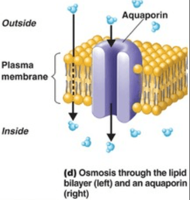 lipids ideas oslo water aqua osmosis