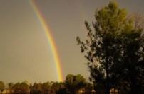 rainbow 2016 5