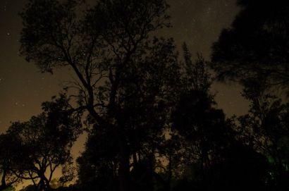 Banksia trees and stars at Rosebud