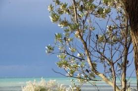 banksia-feb-19-17