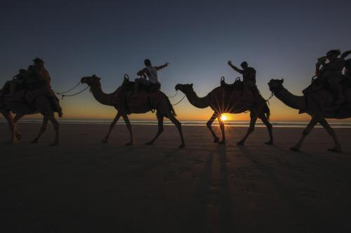 Camels at sunset, Cable Beach
