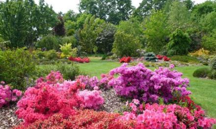 Jardin de Brocéliande