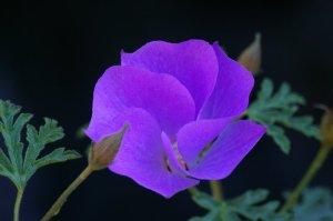 jardin du kestellic (3)