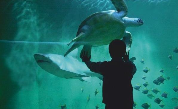 Grand Aquarium de Saint Malo