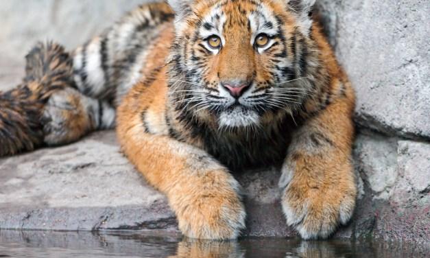 Zoo – Parc Animalier PACA