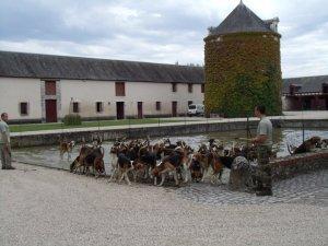 Château de Cheverny la plus grande meute de chiens