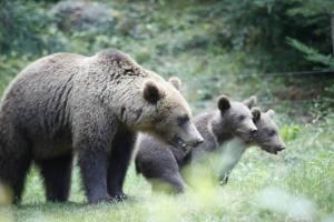 Parc Animalier des Pyrénées oursons