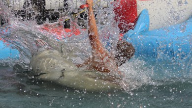Photo of Water Challenge Koemarkt Purmerend