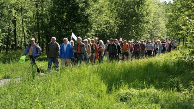 Photo of Seniorenwandeling (65+) in herfstsferen in het Purmerbos