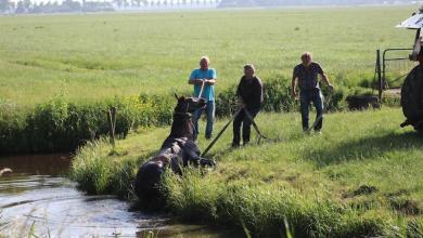Photo of Paard te water Nekkerweg Middenbeemster