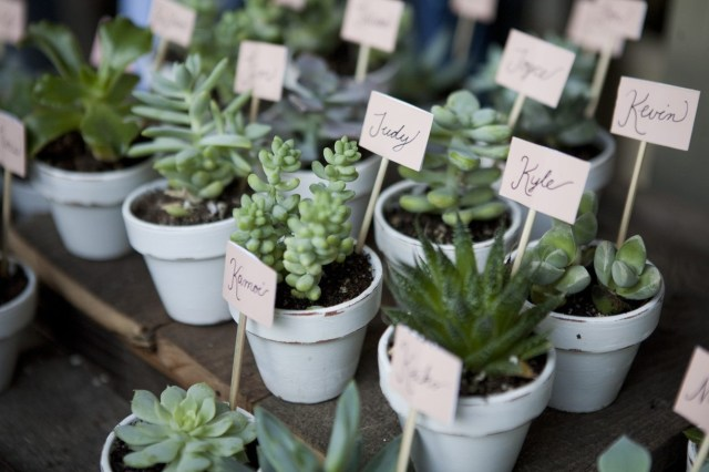 Wedding Suvenirs Ideas Wedding Plant Favors How To Grow Your Own Wedding Favors
