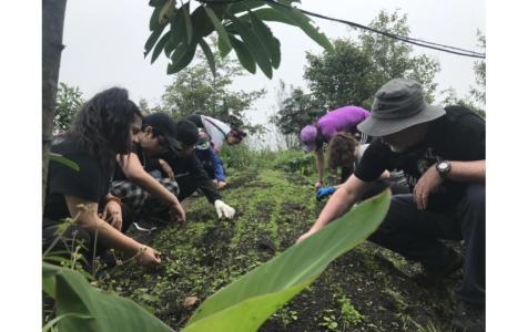 Ecuadorian Agriculture