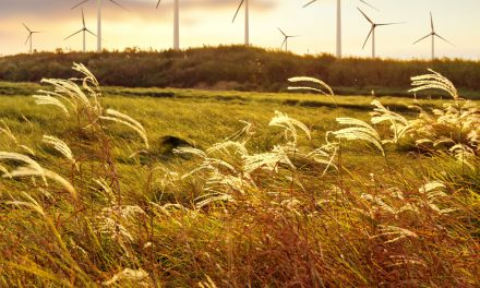 Pattern Energy strengthens its position in Mexico; acquires 1 GW of wind farms