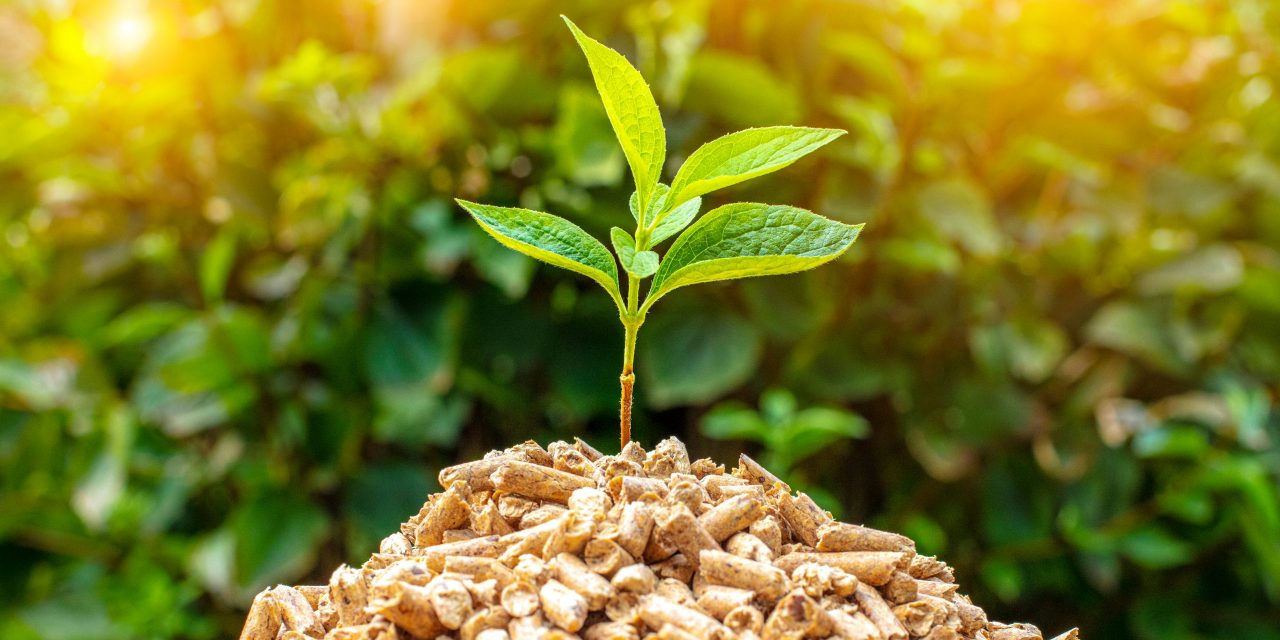 Clean Energy Technologies signs MoU for $15 million biomass project
