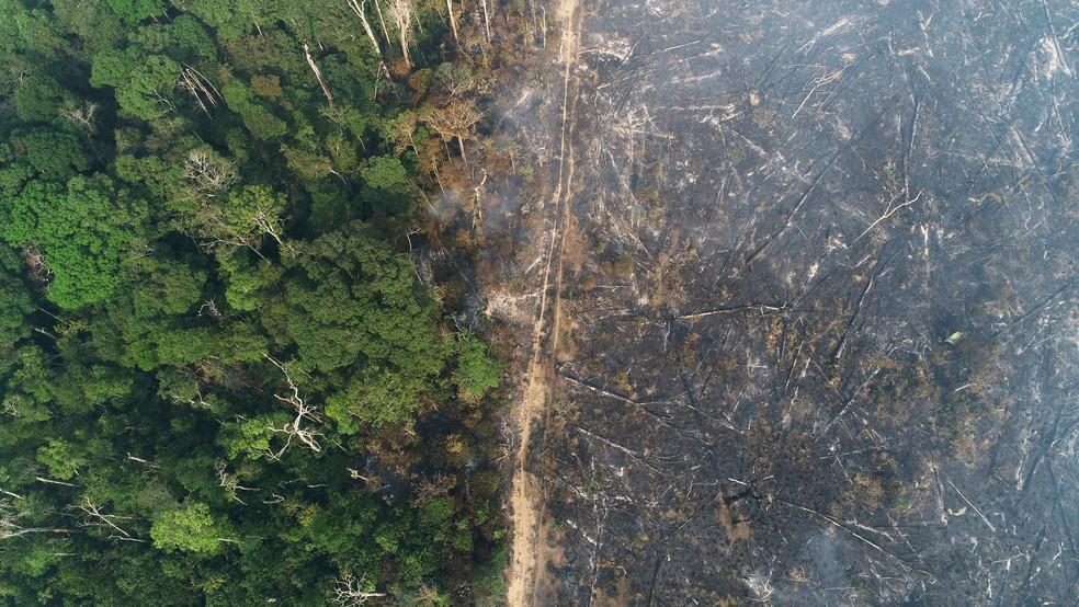 PL para moratória de cinco anos nos desmatamentos da Amazônia é apresentado na Câmara