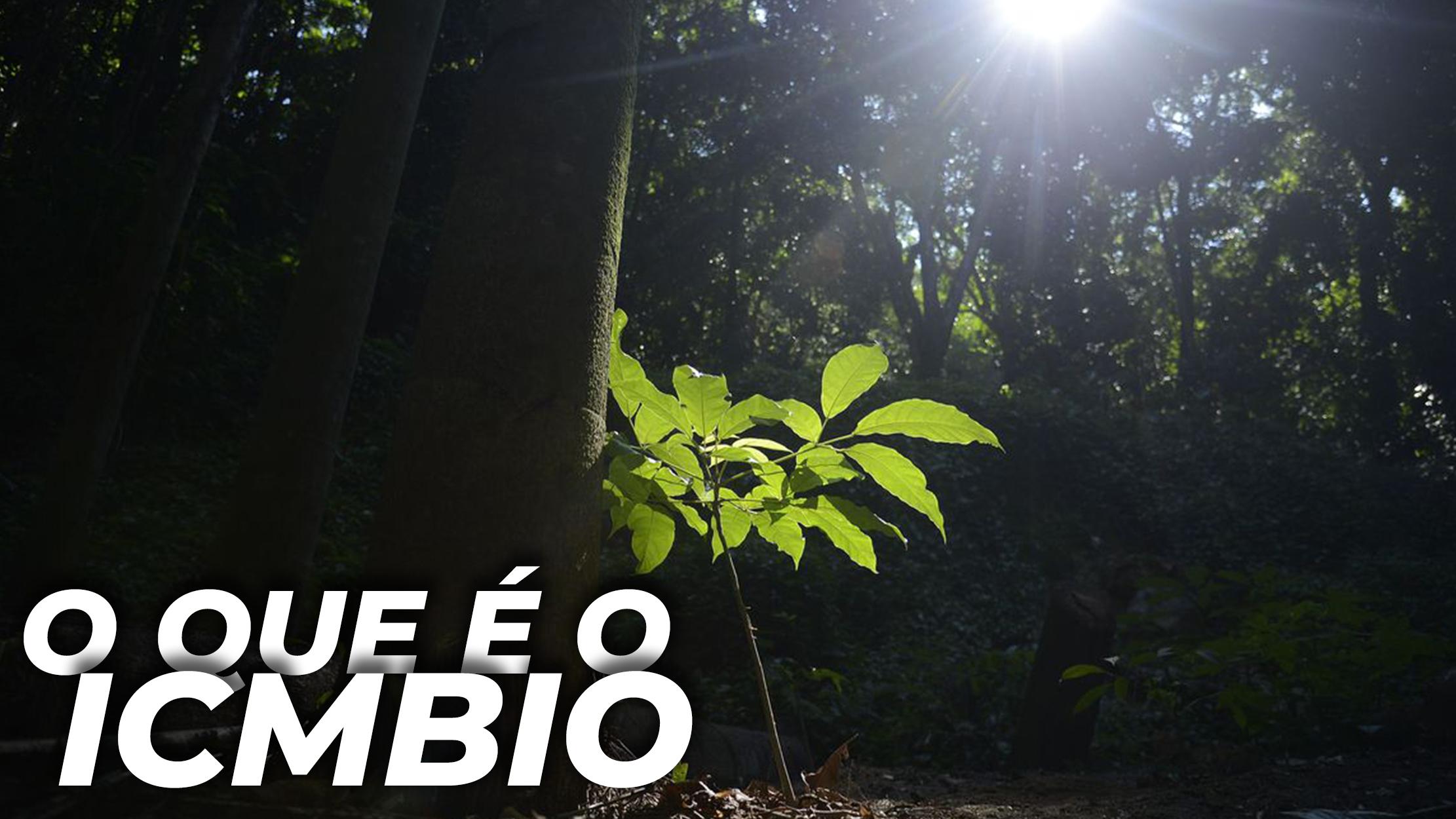 ICMBIO: O QUE FAZ O ÓRGÃO ATACADO POR JAIR BOLSONARO