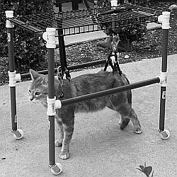 cat with neurological problems in a harness and cart I built to help teach her to walk again
