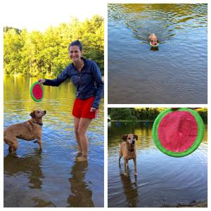 Bella the dog playing in water with her person a year after recovering from several issues