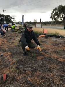 Planting of seedlings by Bicton MP Lisa O'Malley