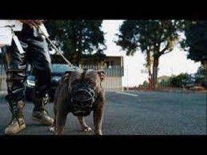 Big Monii – We Go Dey Ok