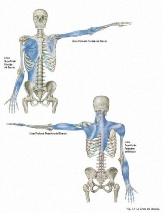 shoulder line.jpg