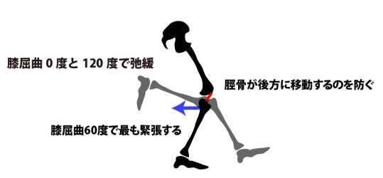 前十字靭帯の緊張肢位
