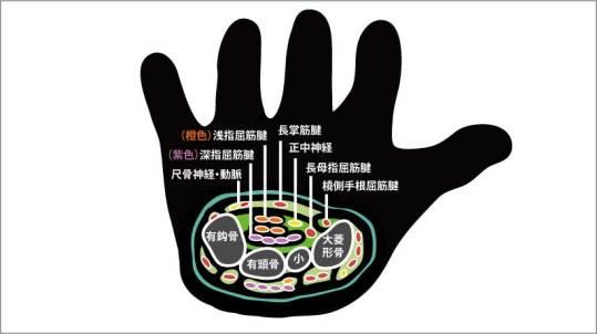 手根管部の断面図