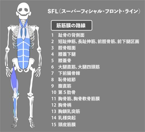 アナトミートレイン:筋膜:SFL
