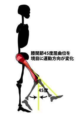 腸脛靭帯の作用変化