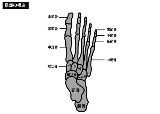 足部の構造|中足骨骨折