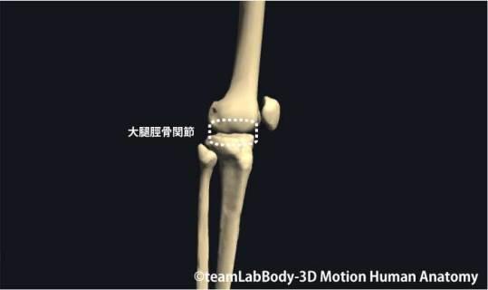 大腿脛骨関節