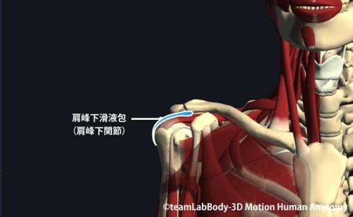 肩峰下関節