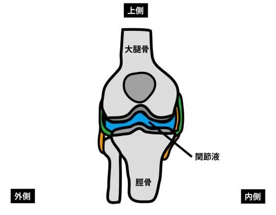 関節液|膝関節