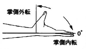母指掌側内転・掌側外転の関節可動域(正常値)