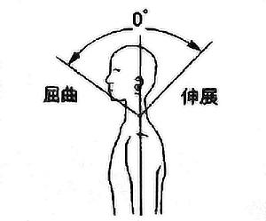頸部屈曲・伸展