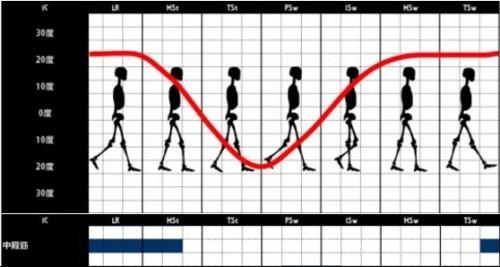 中殿筋の歩行時の筋活動