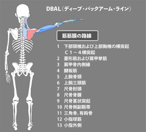 棘下筋1:筋膜:DBAL