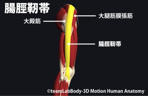 腸脛靭帯と大腿筋膜張筋